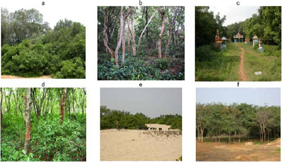 forest conservation in india Introduction some 370 million years ago the first amphibians and the first forests appeared on the earth encyclopaedic information reveals that at one tim.