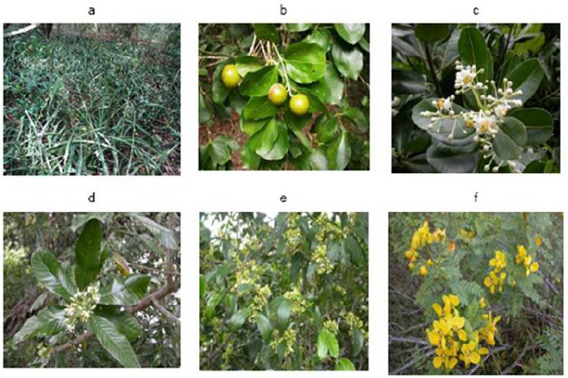 Tropical dry evergreen forests of peninsular India: ecology