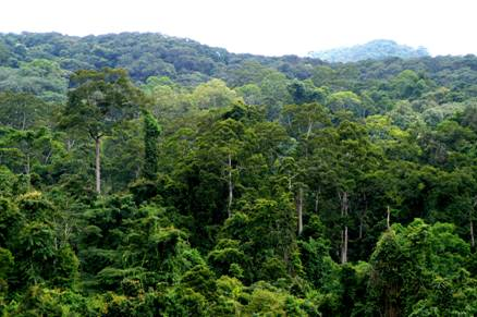 research paper on tropical forests An estimate of the number of tropical tree species land and water, tropical forest research centre thinking of submitting your next paper to pnas.
